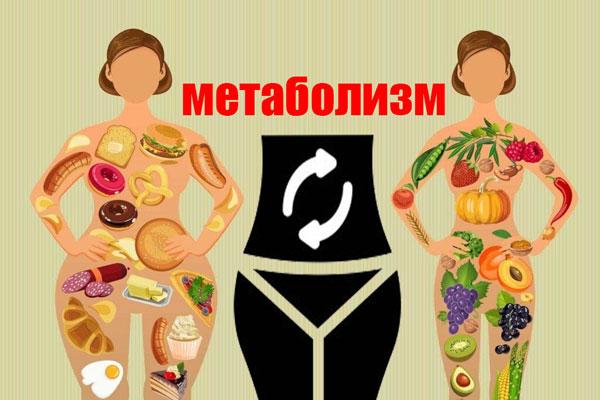Быстрый метаболизм. Медленный метаболизм